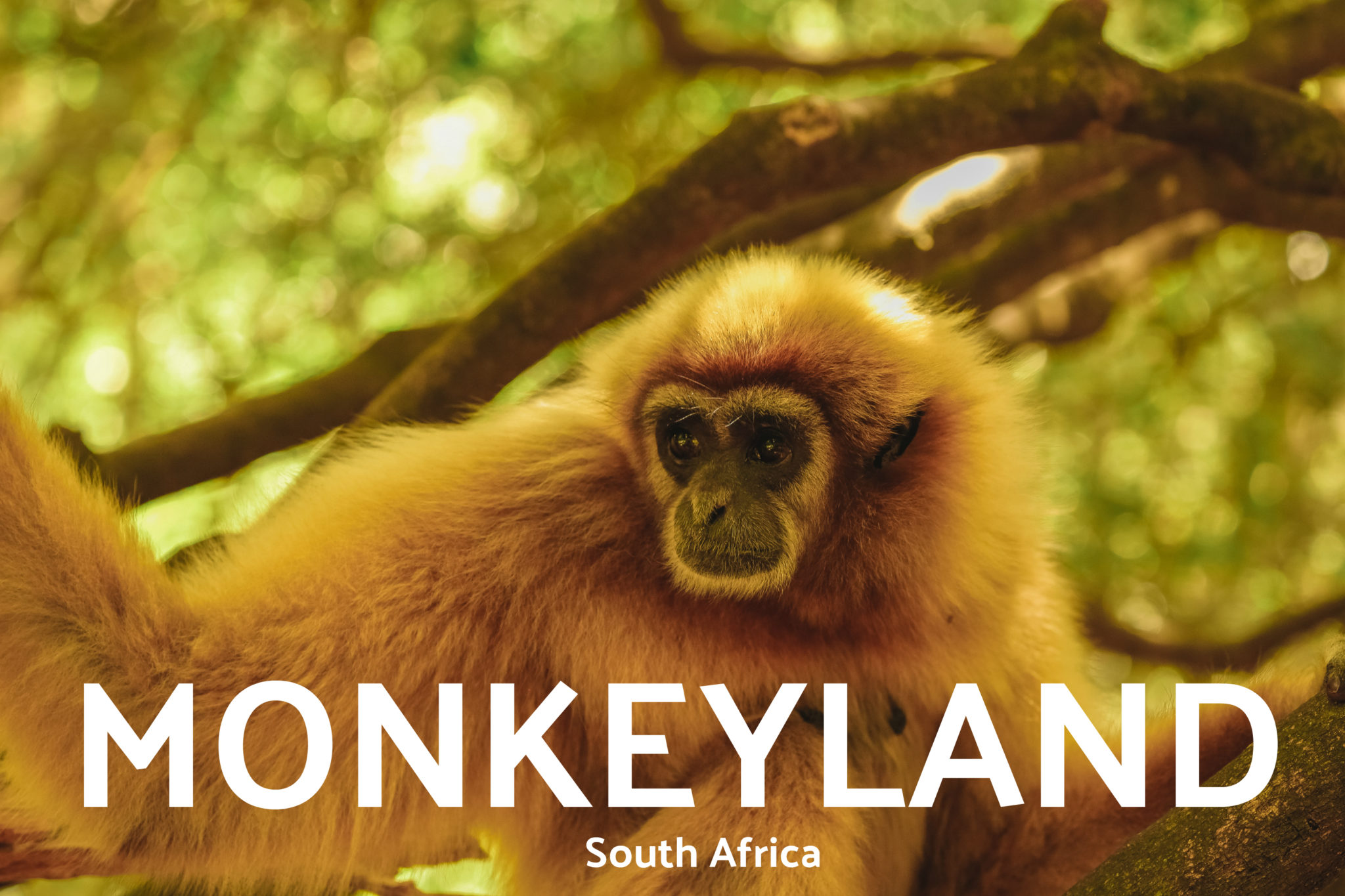 MONKEYLAND South Africa Conservation Media